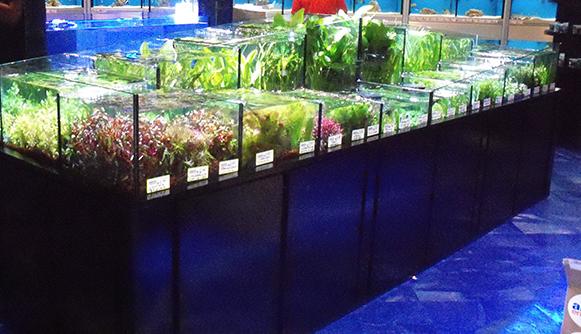 Tropical aquarium manufacturing for Aquarium shop